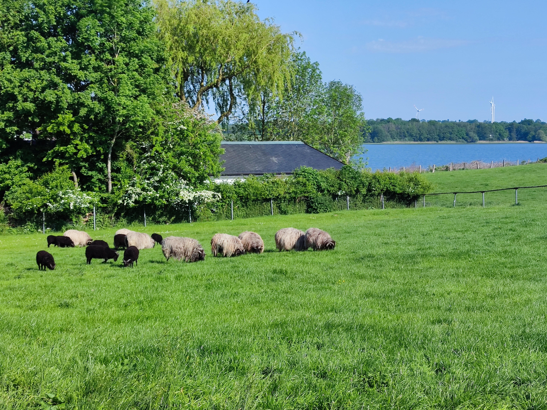 Bauernhof Camping mit Seeblick