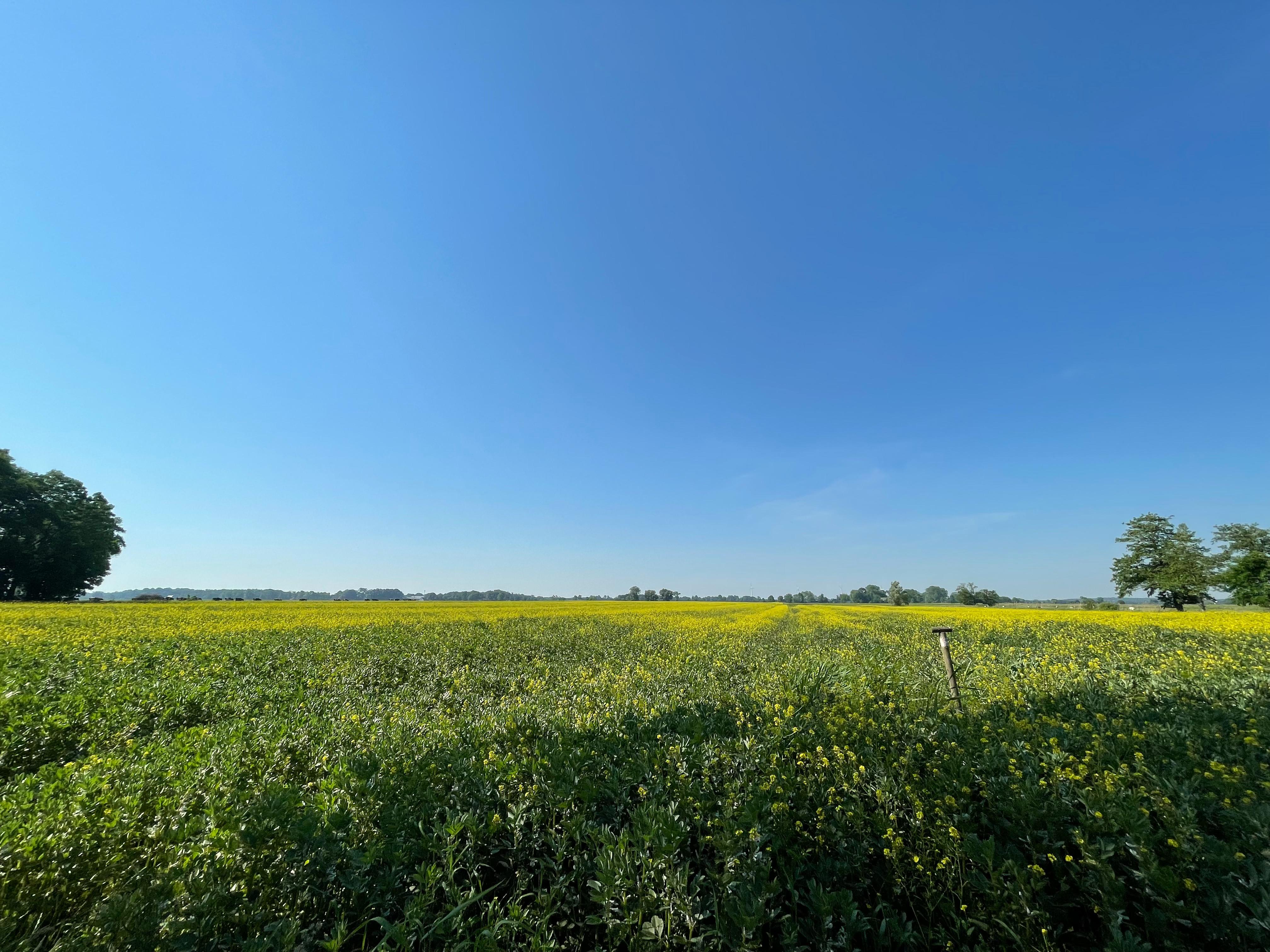 CrohnsHof - sonnige Küstenwiese mit weitem Blick über das Feld