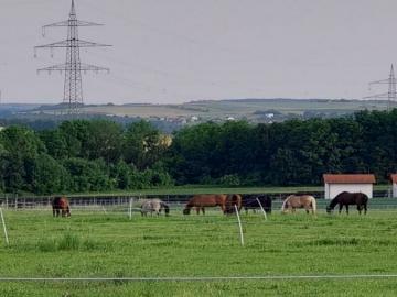 Urlaub neben Pferden
